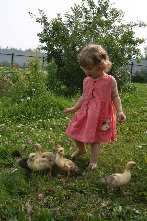 使用用鸭子的小女孩 库存图片