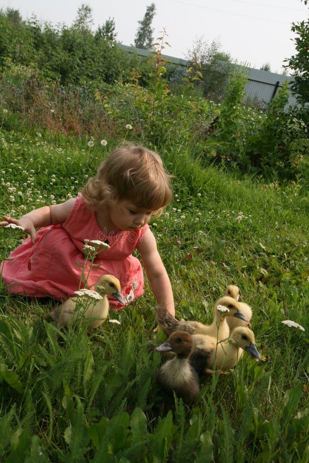 使用用鸭子的小女孩 图库摄影
