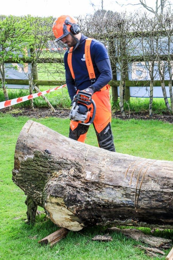 使用电子锯的人锯切木头 免版税库存图片