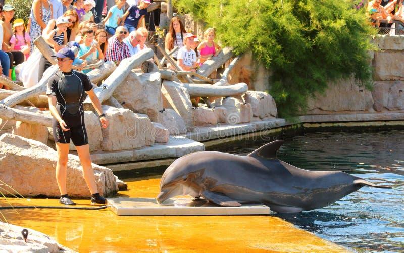 使用的海豚行使,跳跃和 免版税库存图片