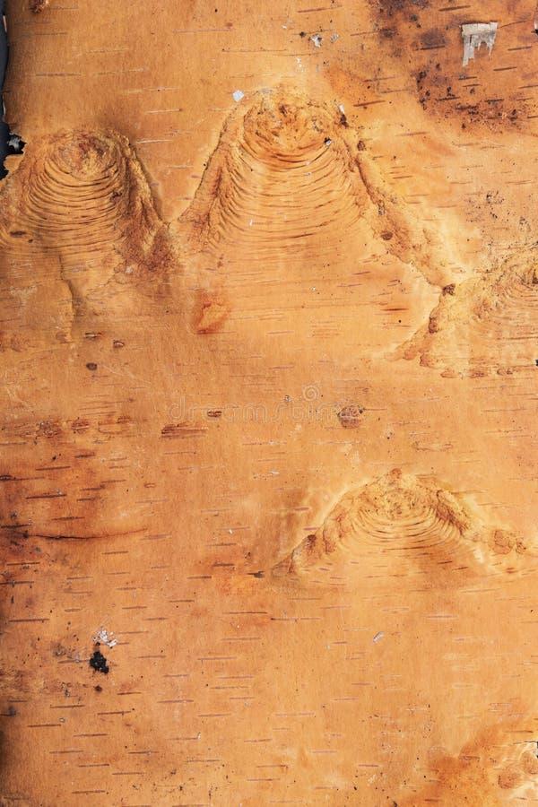 使用的艺术背景互联网可能的项目 白桦树皮的镶边破裂的讨嫌的边 免版税库存照片