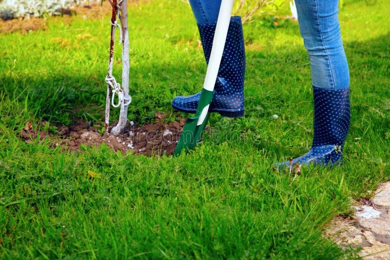使用铁锹的妇女在她的庭院 免版税库存图片