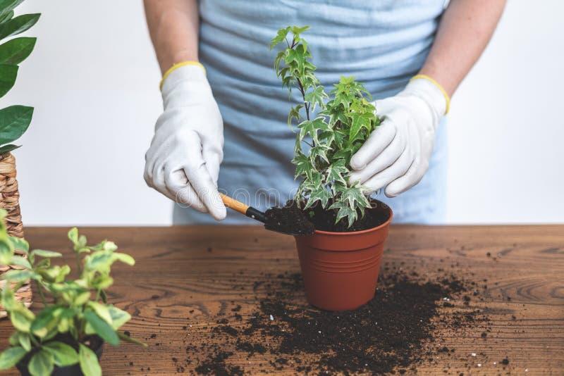 使用铁锹的花匠,举行在手小植物中,站立在木桌附近 免版税库存照片