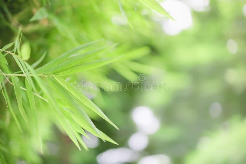 使用,关闭在被弄脏的绿叶背景的自然视图绿色竹叶子在与bokeh和拷贝空间的阳光下 免版税库存图片