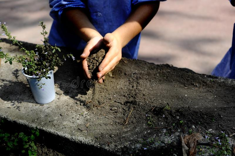 使用,expolring和从事园艺在有土壤的,叶子,坚果,棍子,植物,在学校期间的种子庭院里的小孩 免版税库存图片