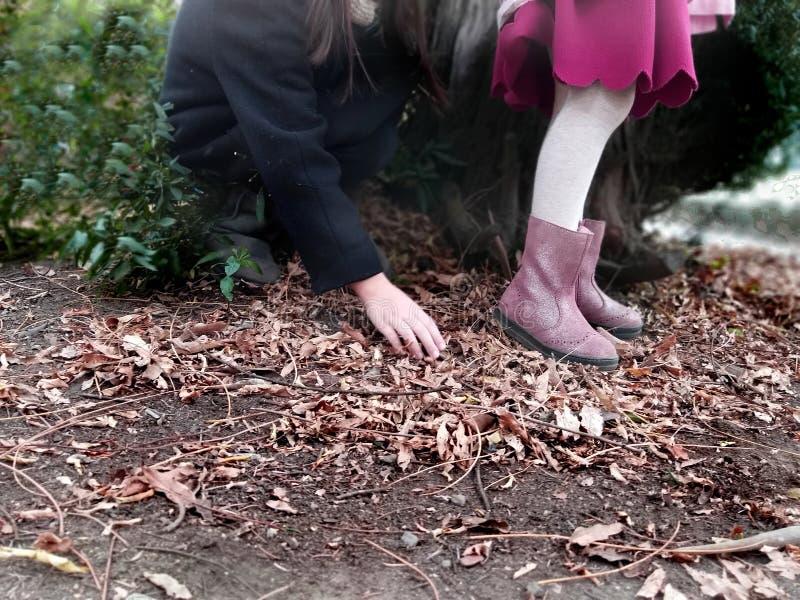 使用,expolring和从事园艺在有土壤的,叶子,坚果,棍子,植物,在学校期间的种子庭院里的小孩 免版税库存照片
