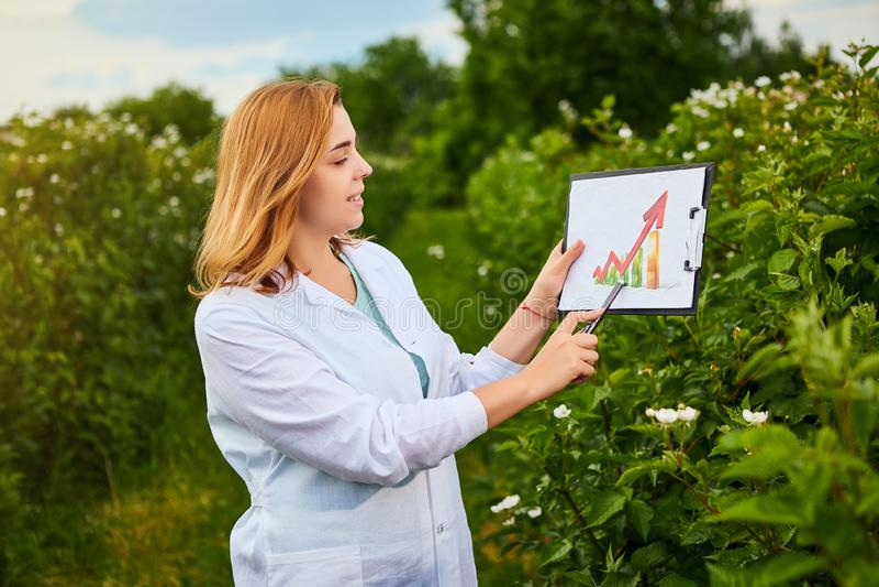 使用infographics,工作在果子庭院里的妇女科学家和显示农作物成长的水平 生物学家审查员审查blackb 免版税库存照片