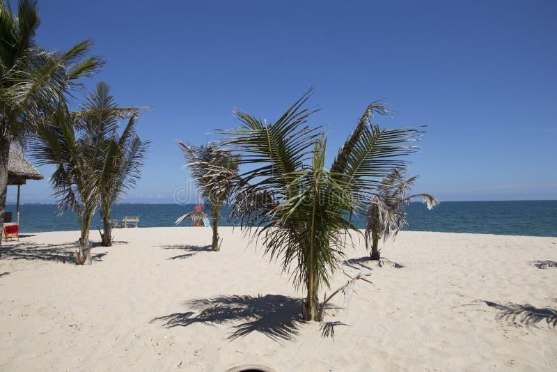 使目炫晴朗的蓝色沙子和美丽的白海和的椰子 免版税库存图片