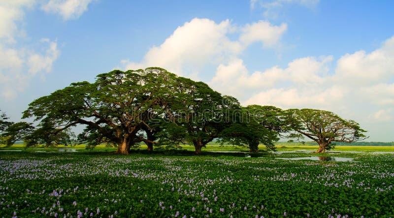 使看法环境美化到有树和莲花的, Tissamaharama,斯里兰卡Tissa湖 库存图片