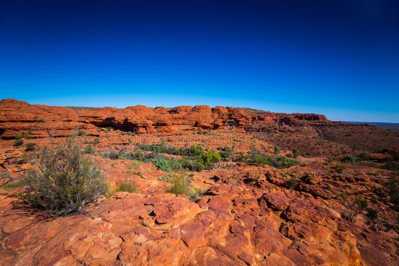 使看法环境美化在Canyon,在内地澳大利亚国王 免版税库存照片