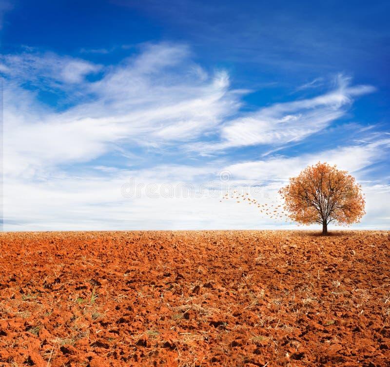 使看法,蓝天,秋天,作为背景的用途环境美化 库存图片