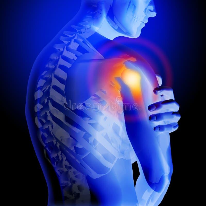 使肩膀痛苦 骨骼和身体的X-射线 一个人的解剖身体 3D医疗例证 库存例证