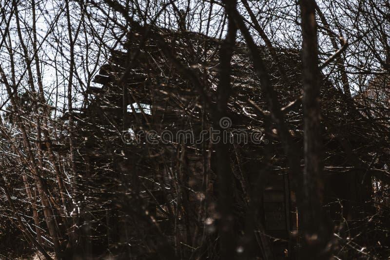 使荒凉的小屋长满与树 库存图片