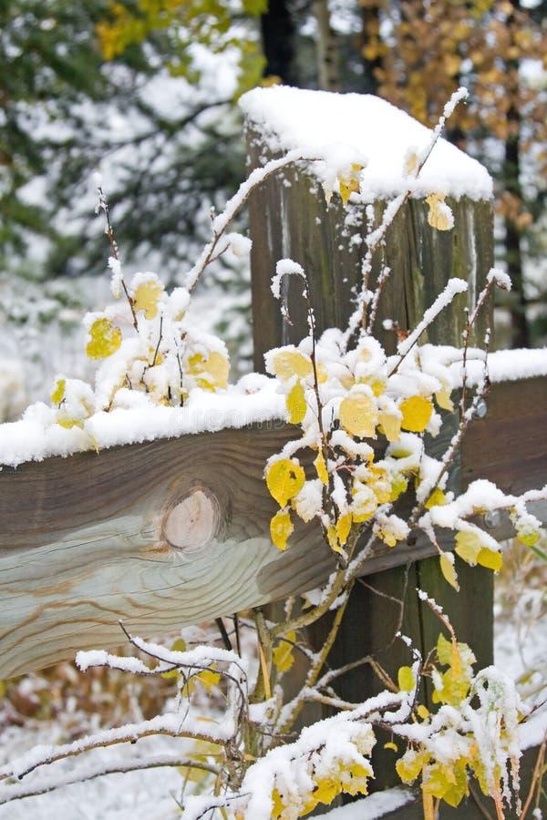 使雪冬天环境美化 免版税库存图片