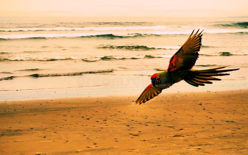 使鹦鹉靠岸 库存照片