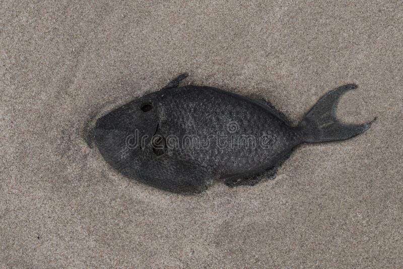 使biohazard停止的装饰的鱼图象被挂接的符号靠岸 图库摄影