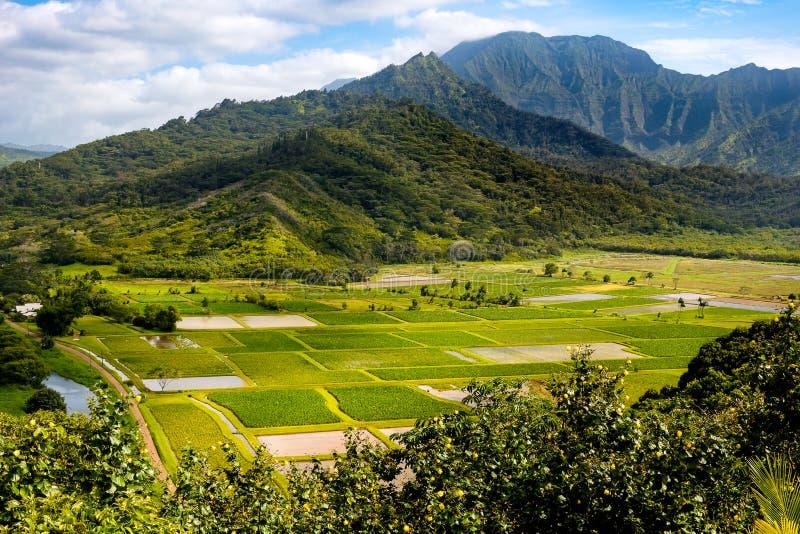 使Hanalei谷和绿色芋头领域环境美化,考艾岛看法  库存图片