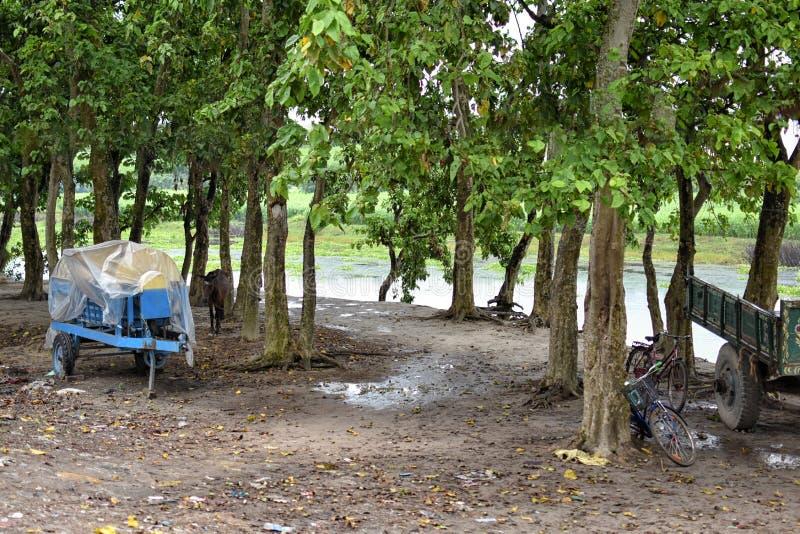 使Jalangi河惊奇风景,是恒河的分支在西部印度州的穆尔斯希达巴德和纳迪亚区  免版税库存照片