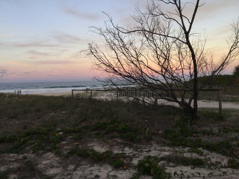 例证偏僻的日落结构树向量 图库摄影