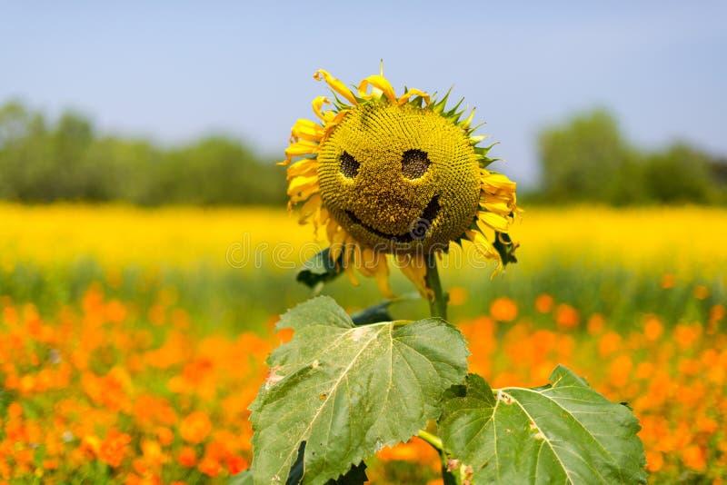 例证季节微笑夏天星期日 库存照片