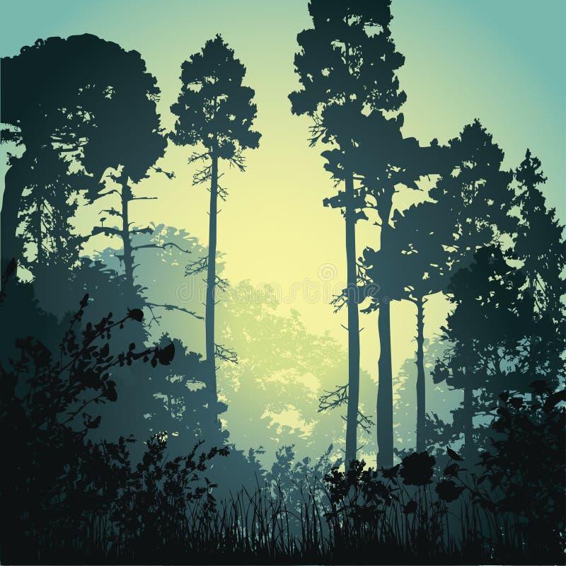 例证森林早晨 皇族释放例证