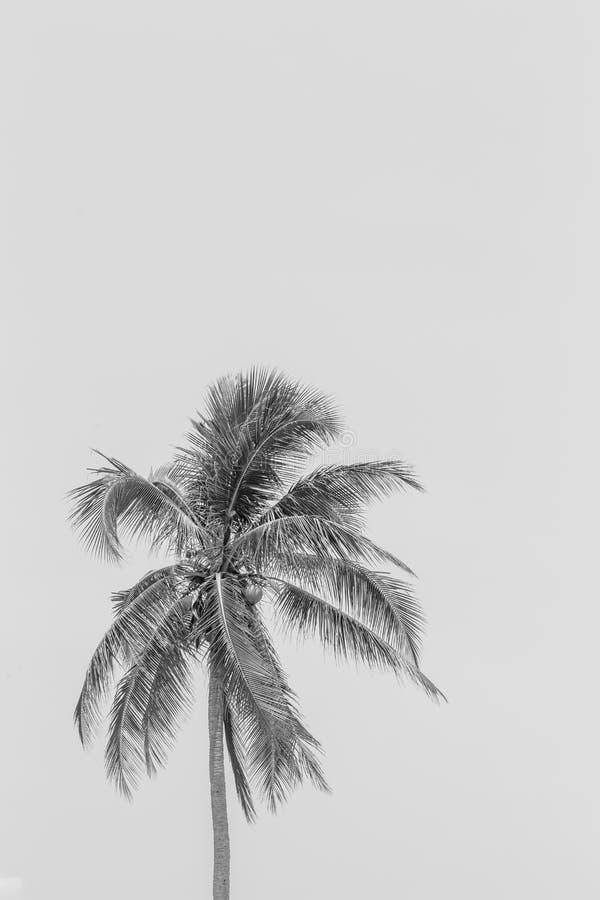 例证现实黑剪影隔绝了热带棕榈 免版税库存图片