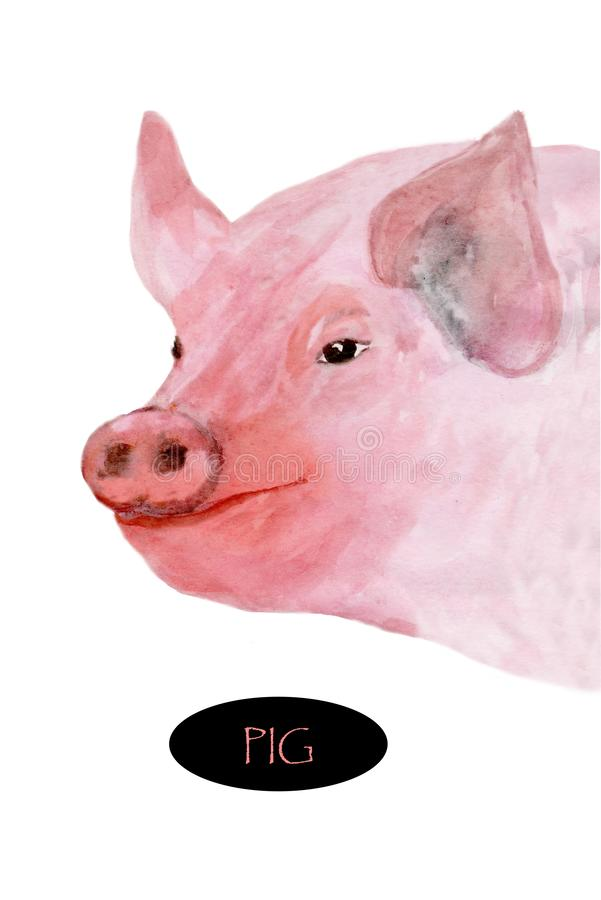 例证,猪的画象绘与水彩 皇族释放例证