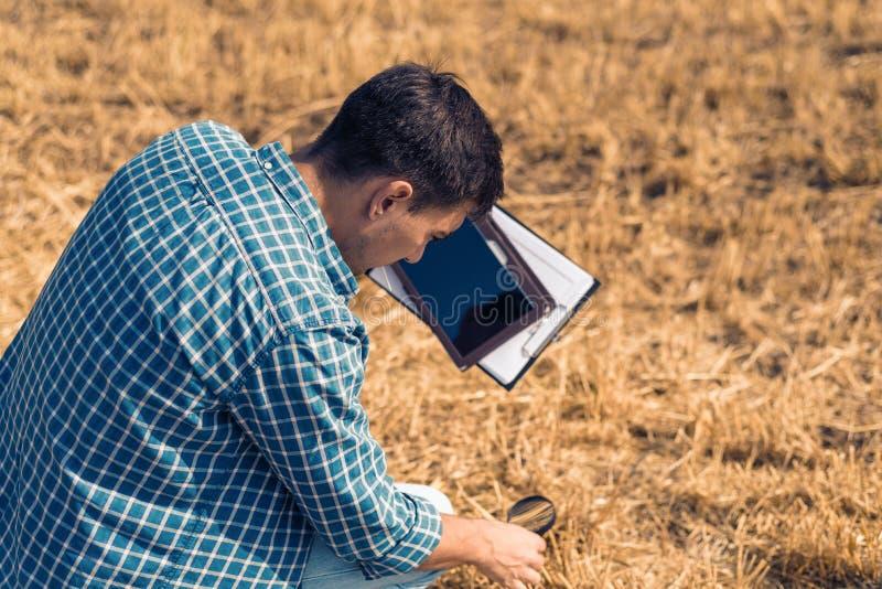 供以人员农夫农艺师与片剂和放大镜坐与干草的领域,控制,检查,分析,研究 免版税图库摄影