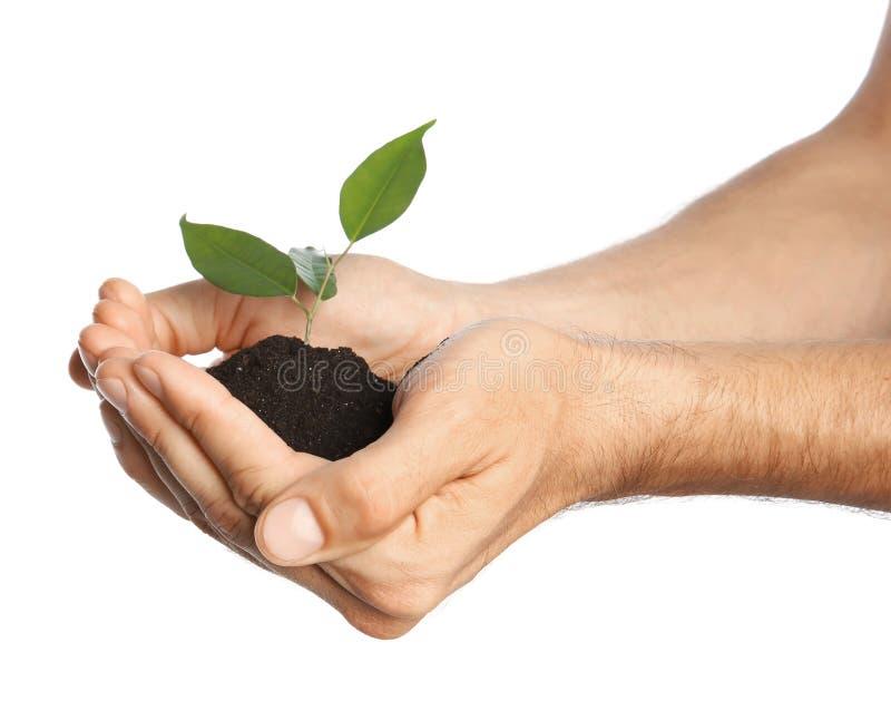 供以人员拿着与绿色植物的土壤在手上 库存照片