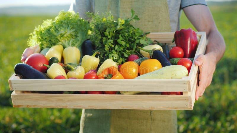 供以人员拿着有一套的农夫一个箱子秋天菜 库存照片