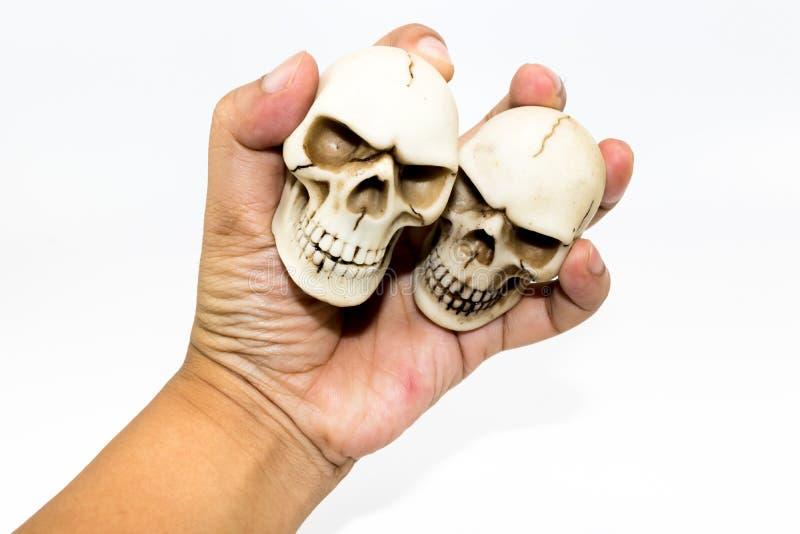 供以人员握有白色背景的手小被伤的头骨 免版税库存照片