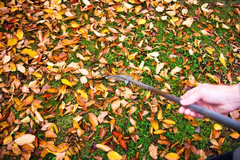 供以人员收集下落的秋叶第一人景色 免版税库存图片