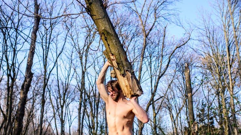 供以人员收集在森林伐木工人或樵夫性感的赤裸肌肉躯干汇聚的残酷坚强的可爱的人木头 图库摄影