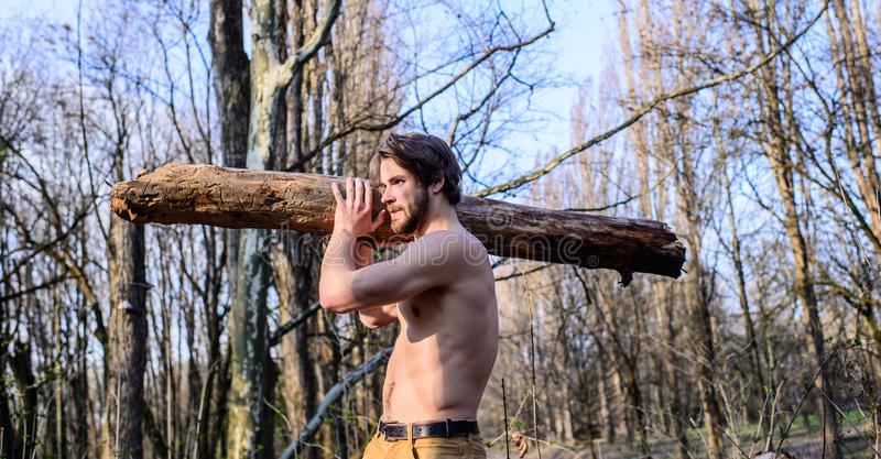供以人员收集在森林伐木工人或樵夫性感的赤裸肌肉躯干汇聚的残酷坚强的可爱的人木头 免版税库存图片