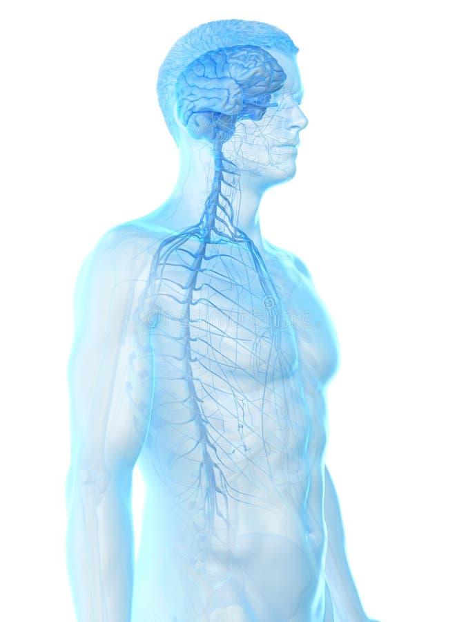 供以人员神经系统 向量例证