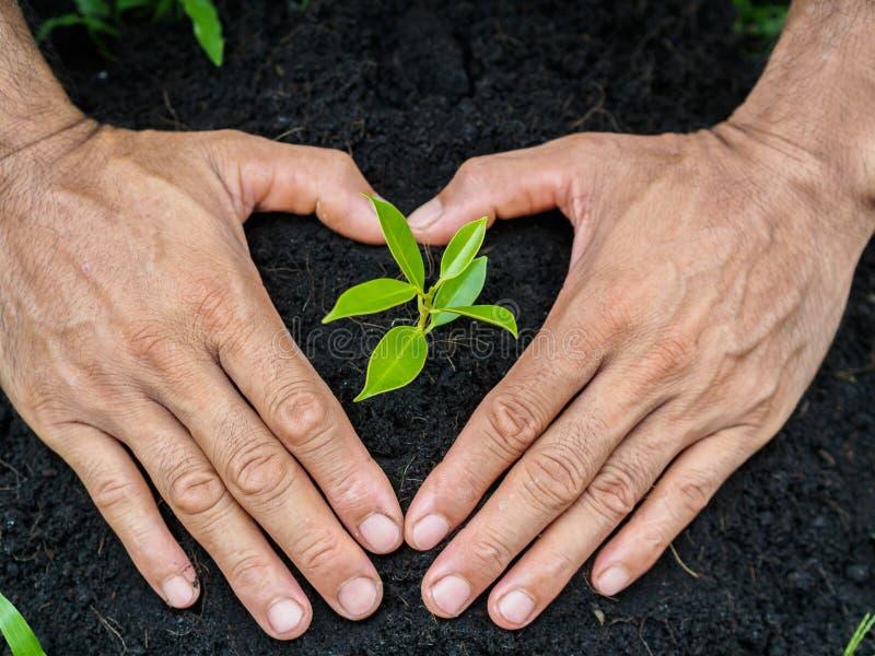 供以人员种植树的手入土壤 概念种植 免版税库存照片