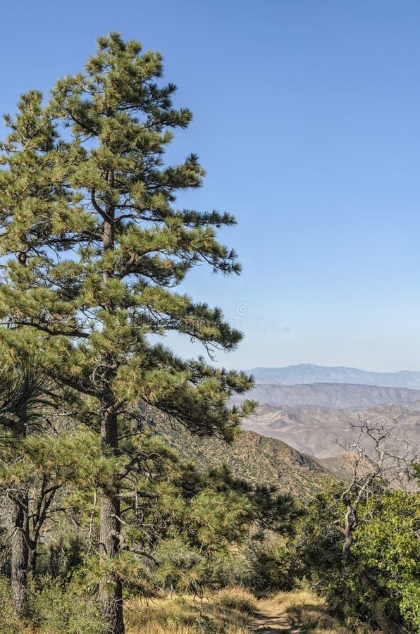 供徒步旅行的小道克利夫兰国家森林加利福尼亚 免版税库存图片