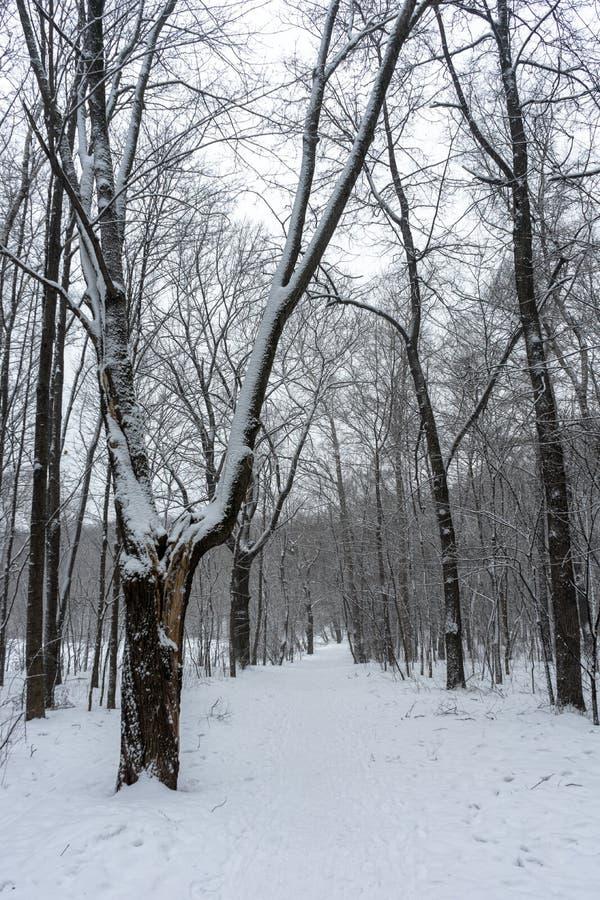 供徒步旅行的小道在冬天多雪的森林里 库存照片