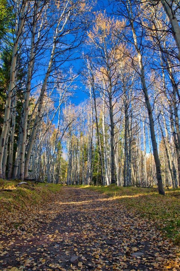 供徒步旅行的小道在加拿大罗基斯的卡纳纳斯基斯地区 库存照片