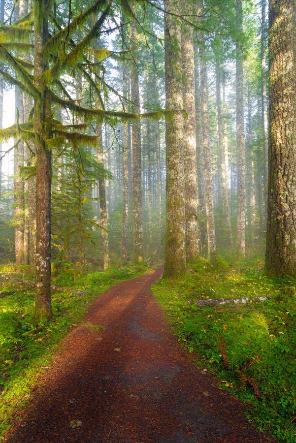 供徒步旅行的小道在华盛顿州公园美国美国 免版税库存图片