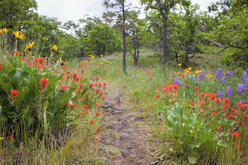 供徒步旅行的小道在哥伦比亚河峡谷在春天 免版税库存照片