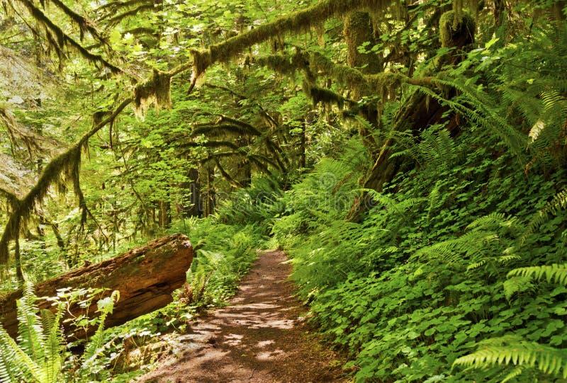 供徒步旅行的小道在有蕨和绿色植物的森林里 库存照片