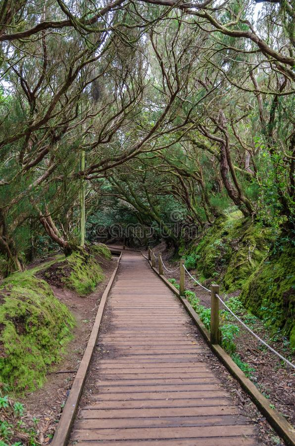 供徒步旅行的小道在Anaga,特内里费岛森林里  库存照片