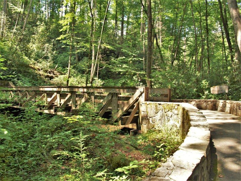 供徒步旅行的小道桥梁在乔伊斯Kilmer国家森林 免版税库存图片