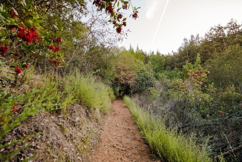 供徒步旅行的小道看法在别墅蒙塔尔沃县公园,萨拉托加,南旧金山湾区,加利福尼亚 库存照片