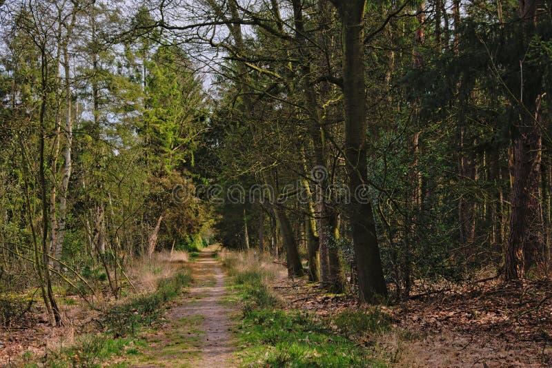 供徒步旅行的小道通过卡尔姆特豪特荒地的一个森林 免版税库存图片