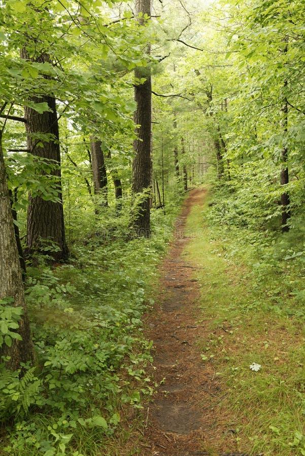 供徒步旅行的小道通过州长诺尔斯陈述森林,威斯康辛 库存图片