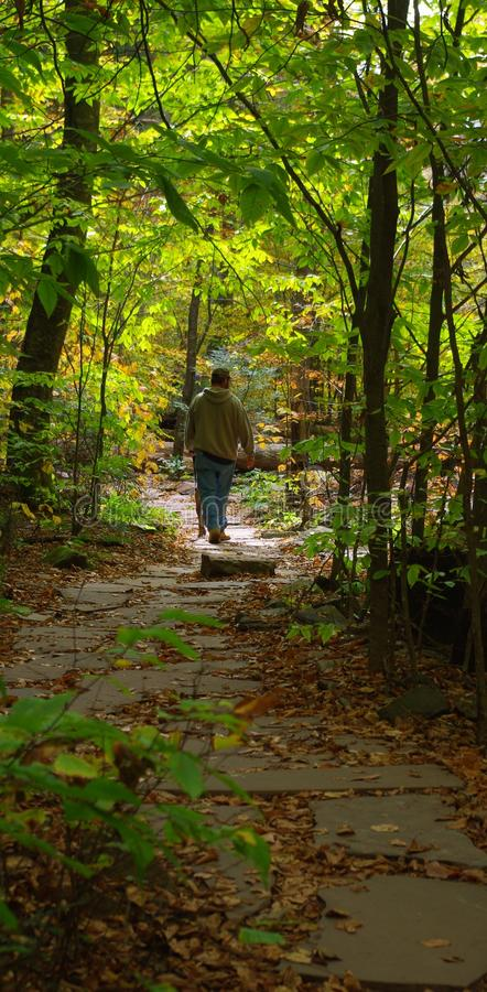 供徒步旅行的小道 免版税库存图片