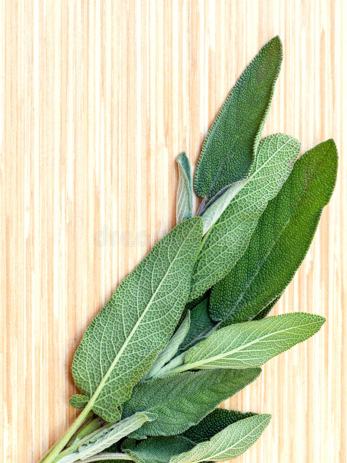 供选择的地中海药用植物Salvia officinalis或 库存照片