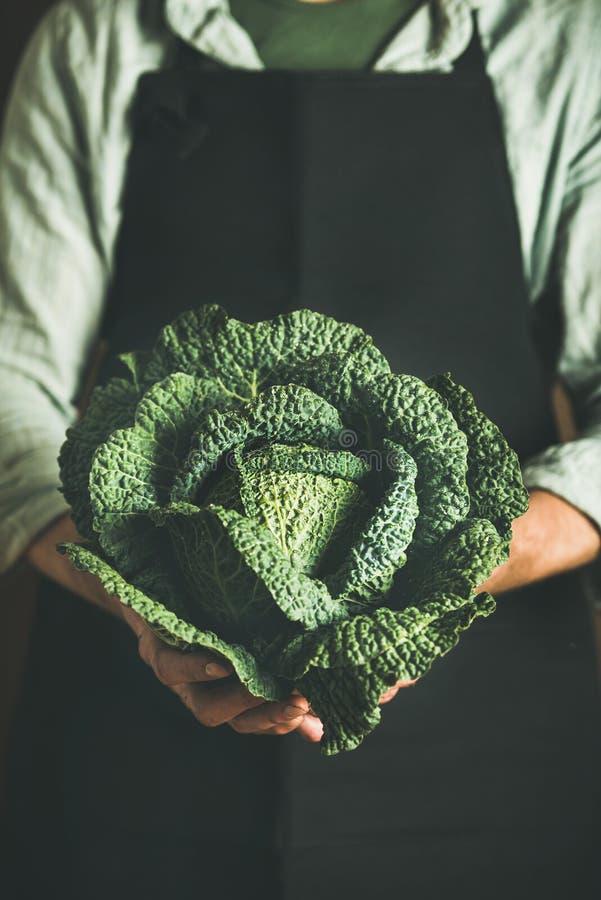 供以人员保留新绿色cabbagein的佩带的黑围裙在手 免版税库存照片